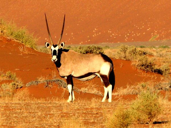 namibie-tussen-woestijn-en-oceaan