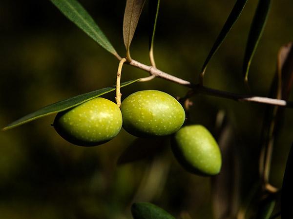 L'olive!